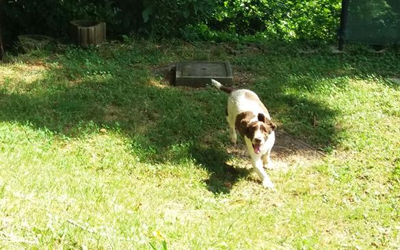 dogwalking-agosto2020_41