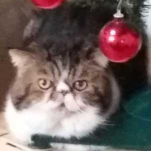 gatto-hp