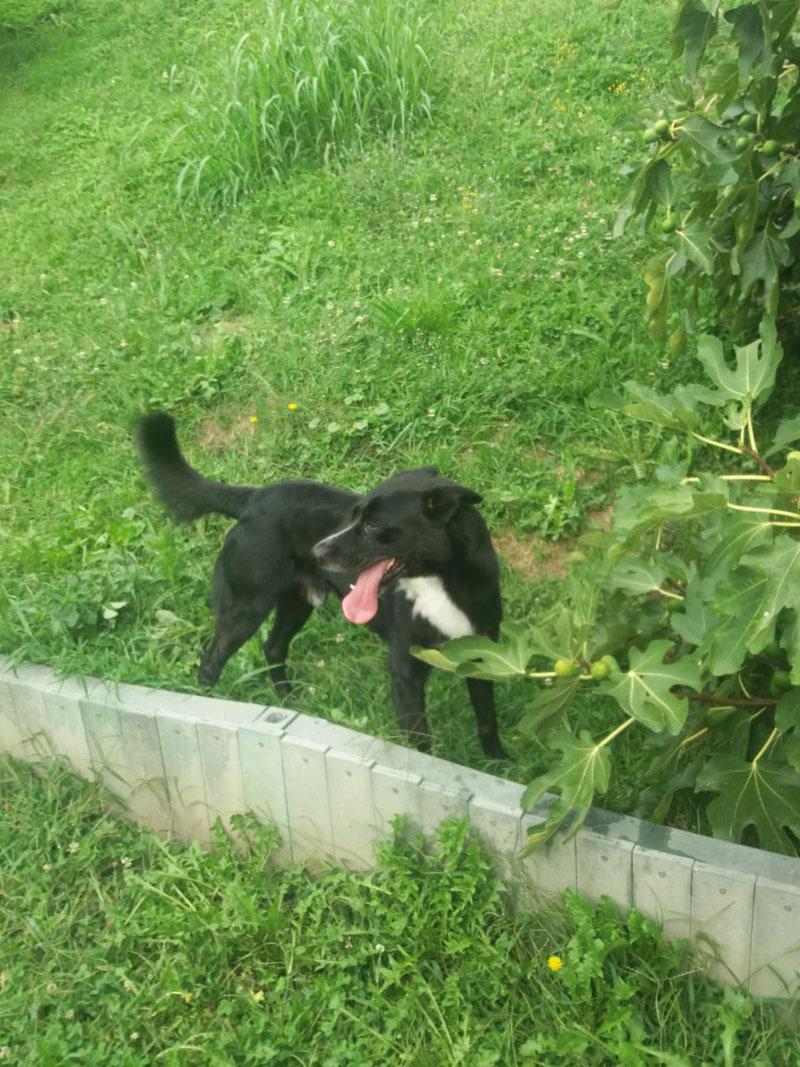pensione-cani-agosto_0004_Livello 4