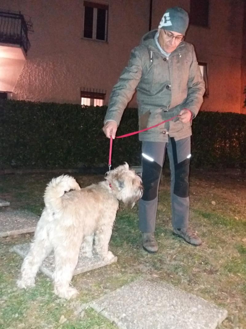 pensione-cani2702-3