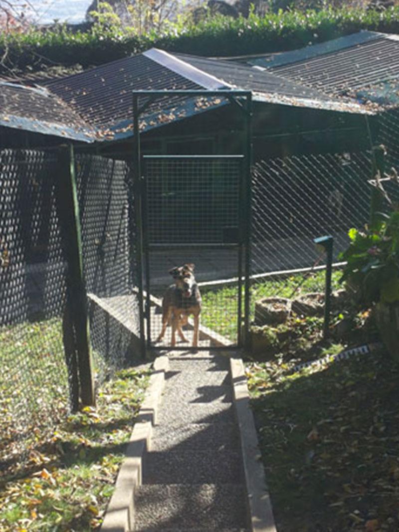 pensione-cani4