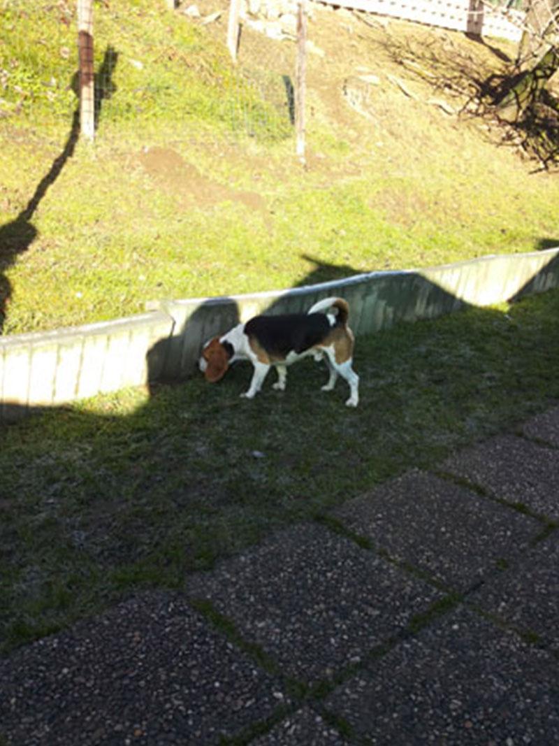 pensione-cani6