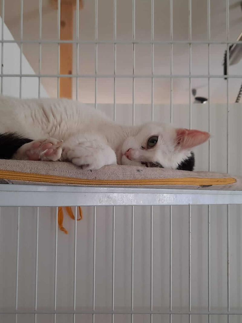 pensione-gatti-settembre20_1